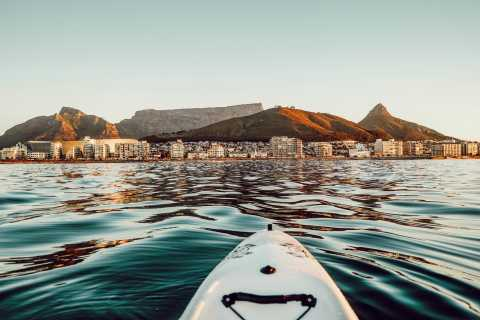 Ciudad del Cabo: Marine Life Kayak Tour from The V&A Waterfront