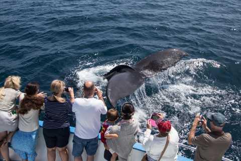 Newport Beach: Year-Round Whale Watching Cruise