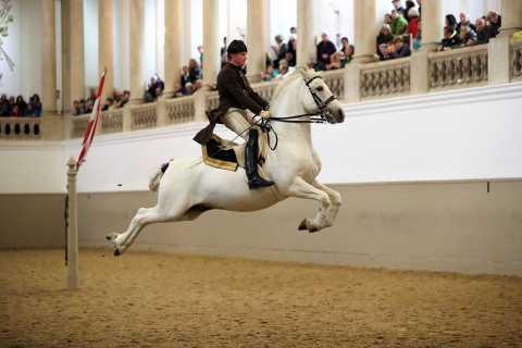 Spectacle de lipizzans à l'École espagnole d'équitation