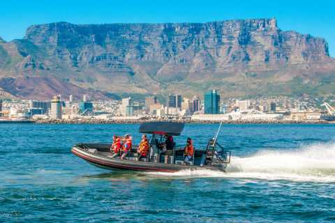 Cape Town Ocean Safari: Speed Boat Adventure in Table Bay