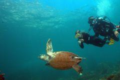 Búzios: Mergulho Submarino para Iniciantes