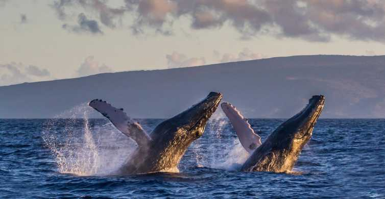Maui: Eco-Friendly Whale Watching Sail from Lahaina Harbor