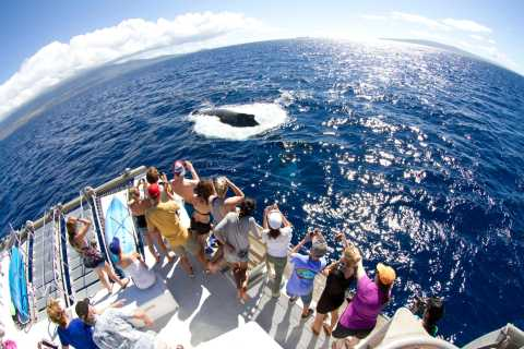 Maui: Eco-Friendly Whale Watch Boat Cruise from Lahaina