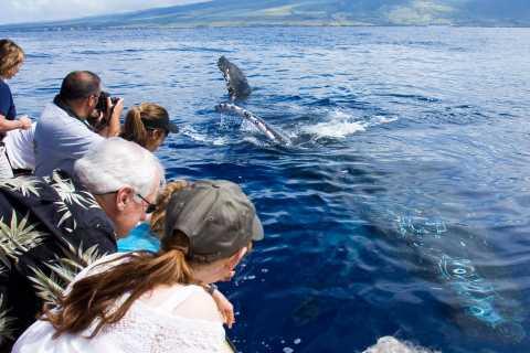 Maui: Eco-Friendly Whale Watching Tour from Ma'alaea Harbor