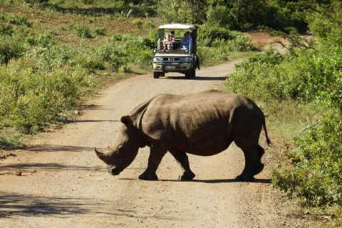 From Cape Town: Wildlife Safari and Winelands Tour Combo