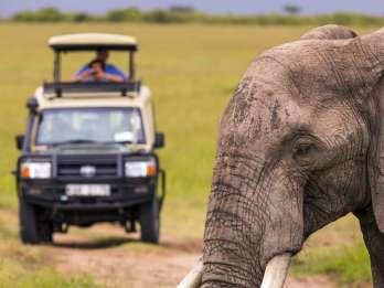 Ab Kapstadt: Tagessafari im Inverdoorn-Wildreservat