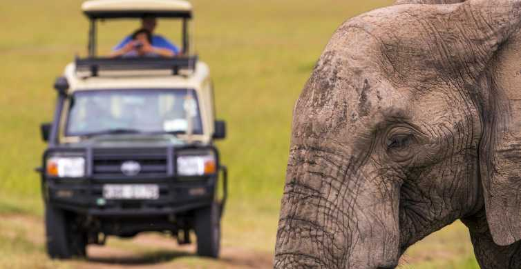 From Cape Town: Inverdoorn Game Reserve Full-Day Safari