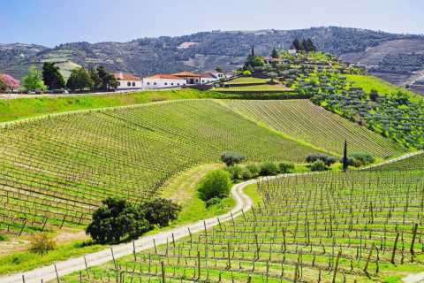 Full-Day Douro Valley Wine Tasting & Lunch in a Vineyard