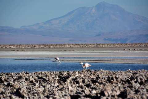 Salar de Atacama, Altiplanic Lagoons, and Toconao Day Tour