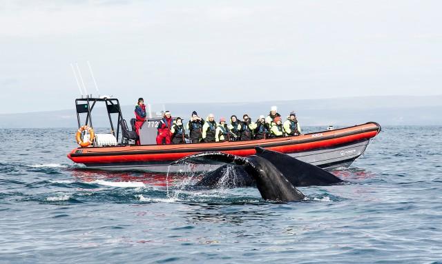 Húsavík: walvissen en papegaaiduikers spotten per boot