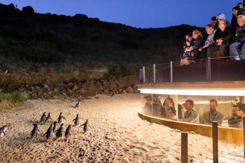 Phillip Island Penguin Parade Ultimate Eco Tour & Lunch
