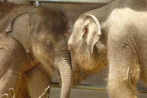 Kandy and Nuwara Eliya: 2-Day Tour from Colombo