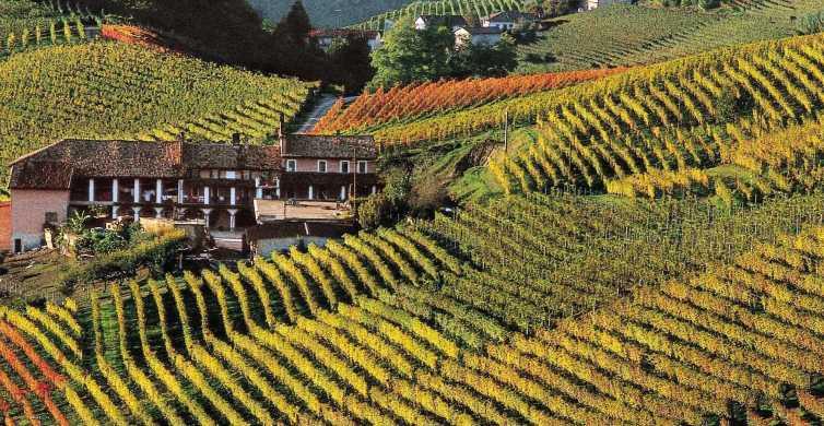 Langhe: tour di 1 giorno della regione con degustazione vini