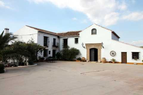 Malaga Private Olive Oil Mill Tour with Breakfast & Tasting