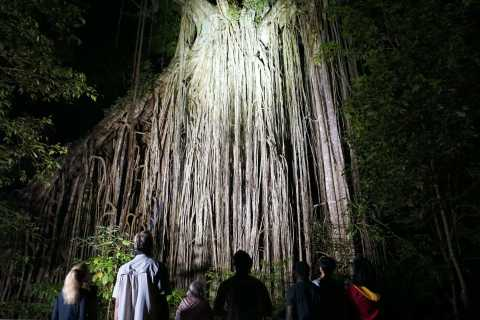 From Cairns: Rainforest & Nocturnal Wildlife Tour