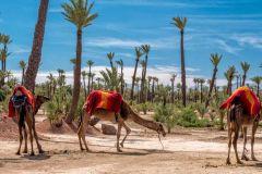 Marrakech: Passeio Quadriciclo e Dromedário no Deserto