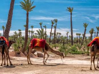 Marrakesch: Halbtägige Wüstentour - Quad & Kamelritt