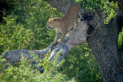 From Ella: Full-Day Yala National Park Safari Tour