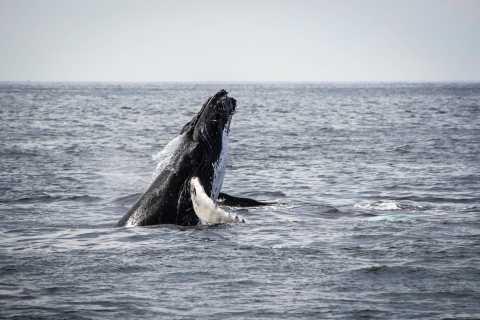From Kawaihae Harbor: 1.5-Hour Kona Whale Watching Tour