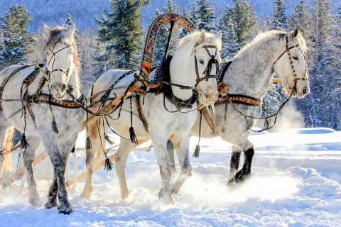 St. Petersburg: Winter Fairy Tale Horse Ride & Tour