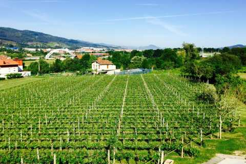Bilbao: Guided Txacoli Wine Tasting and Basque Lunch Tour