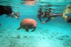 Orlando: Mergulho c/ Peixes-Boi, Snorkel e Passeio de Barco