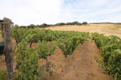 Private Winery Tour and Visit to Ronda