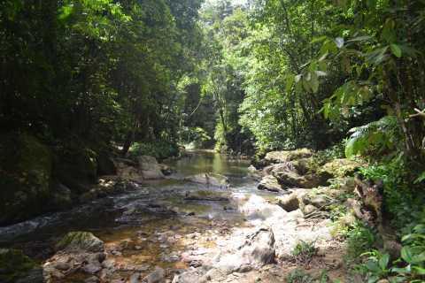 Trinidad & Tobago: Rainforest Hike to Avocat Waterfall