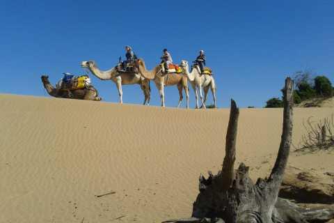 3-Hours Dromedary Ride Essaouira, Morocco