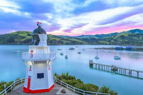 Christchurch: Akaroa & Banks Peninsula Wild Penguin Eco-Tour
