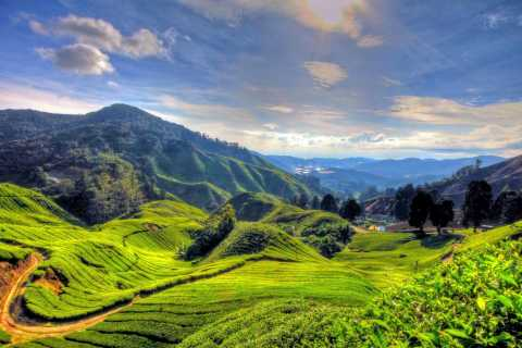 Ab Kuala Lumpur: Private Tagestour zu den Cameron Highlands