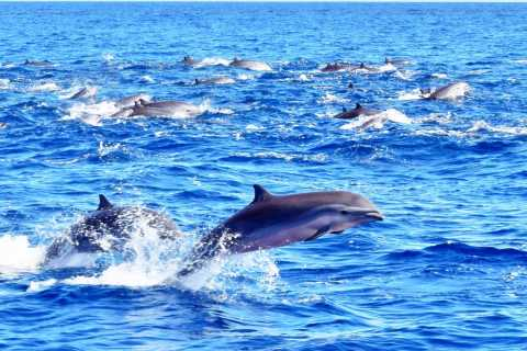 St. Lucia: Dolphin and Whale Watching Safari