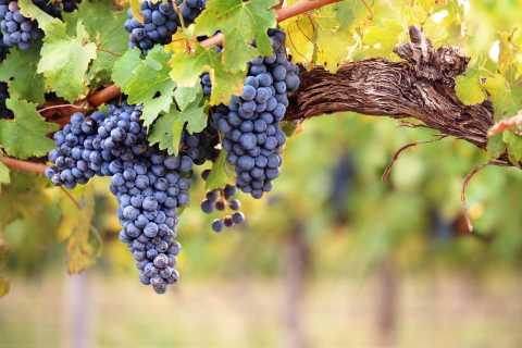 Catalonia: Three Wineries Tour with Lunch