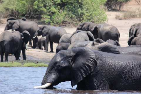 Zimbabwe: Victoria Falls Full-Day Package