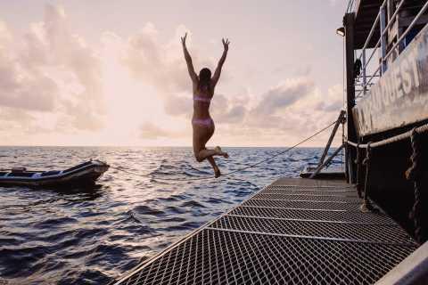 Great Barrier Reef: Mehrtägige Schnorchel- und Tauchtour