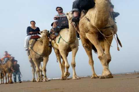 Essaouira: 2 ore Camel Ride