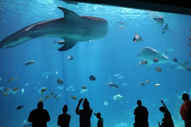 Georgia Aquarium: tickets met voorrang bij de kassa