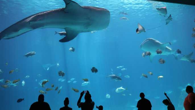 Georgia Aquarium: Skip-the-Purchase-Line Tickets