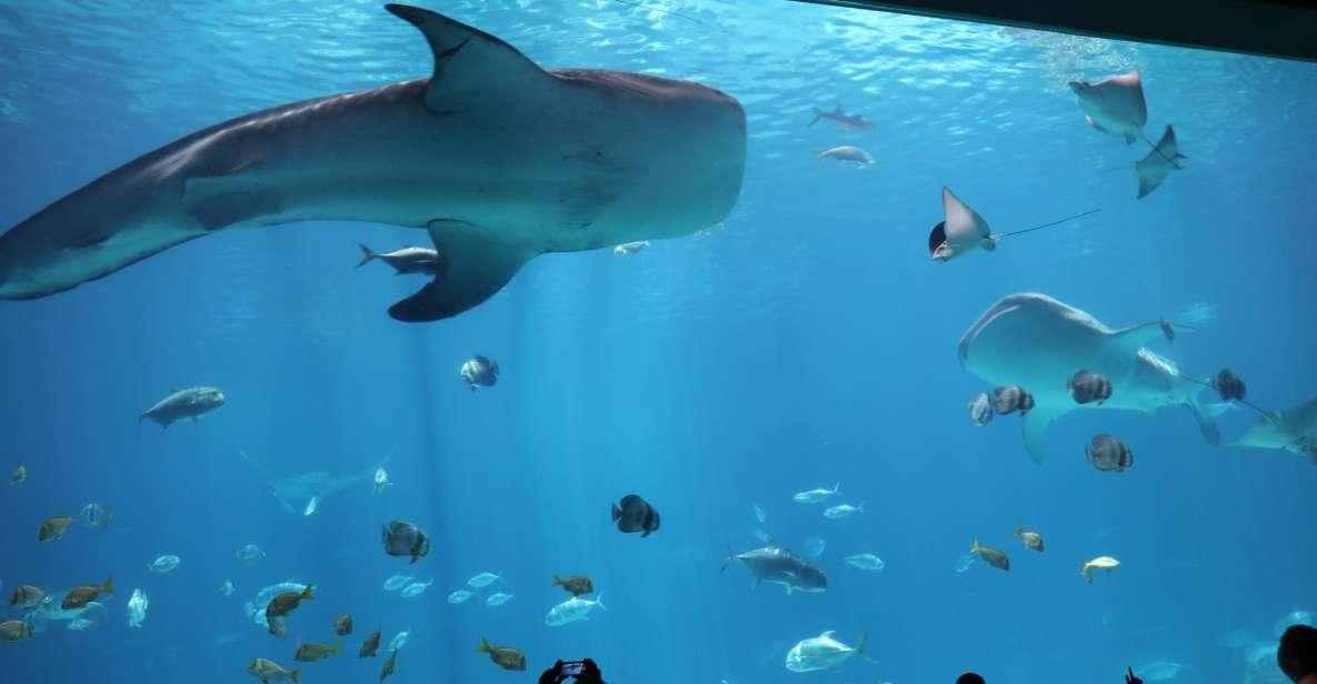 Georgia Aquarium: wstęp bez czekania w kolejce po bilety