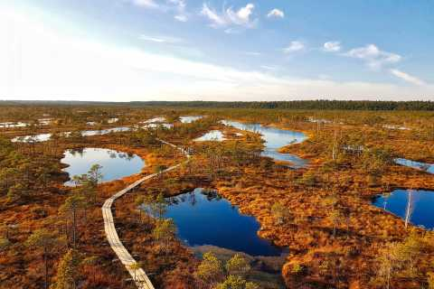 From Riga: Half-Day Adventure In Kemeri National Park
