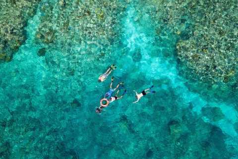 Ab Cairns: Premium-Schnorchel-Tour zum Great Barrier Reef