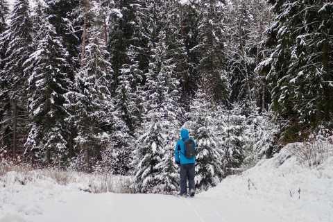 Desde Vilnius: aventura de patadas en el bosque de Labanoras