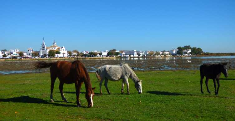 Doñana National Park Off-Road Tour from Seville