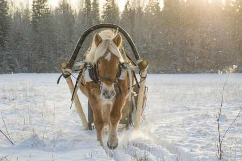 St. Petersburg: Winter Tour with Horse-Drawn Sleigh Ride