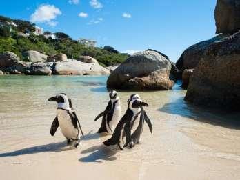 Ab Kapstadt: Cape Point und Pinguine – Entdeckungstour