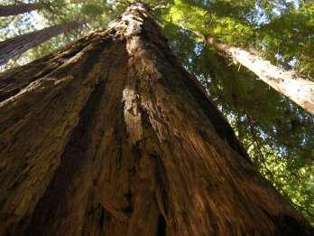 San Francisco: Muir Woods Trip und Kreuzfahrt mit der Golden Gate Bridge