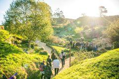 De Auckland: Tour Cidade Cenográfica de Hobbiton c/ Traslado