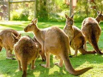 Melbourne: Eintritt zum Healesville Sanctuary