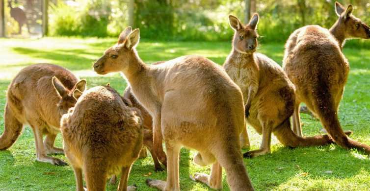 Healesville Sanctuary: General Admission Ticket