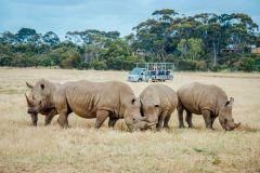 Melbourne: Ingresso de Admissão ao Werribee Open Range Zoo
